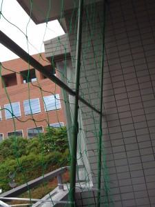 緑のカーテンのためにネット設置